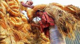 পাটের ভালো দামে কৃষকের মুখে হাসি