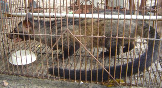 ঝিনাইদহে বিরল প্রজাতির প্রাণী আটক