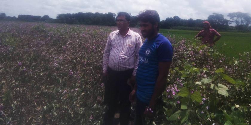 কালীগঞ্জে কৃষকের ৪০ শতক জমির ধরন্ত শিম ক্ষেত কেটে দিলো দুর্বৃত্তরা
