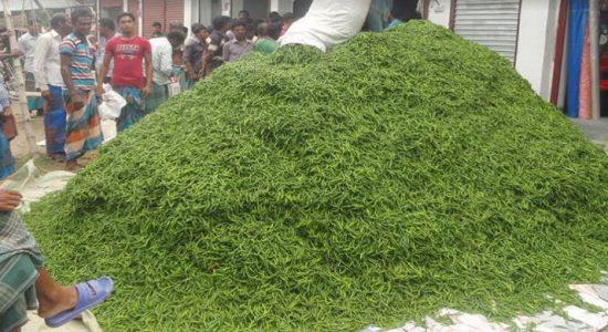 ঝিনাইদহে কাঁচা মরিচের জমজমাট হাট